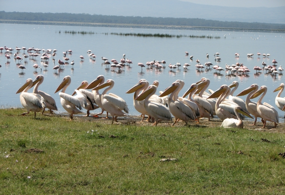 Flamingos in Lake Manyara National Park