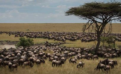 Great Migration serengeti