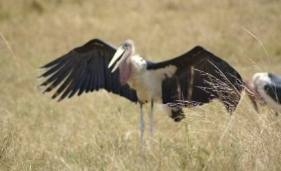 Walking Safaris to Ngorongoro and Serengeti