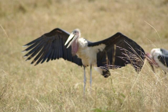 Walking Safaris to Ngorongoro and Serengeti