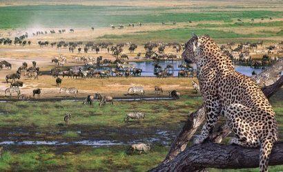 Zebras and Wilderbeest serengeti