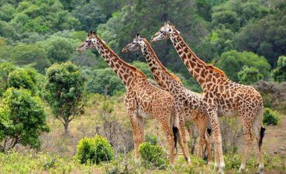 Tanzania walking tour