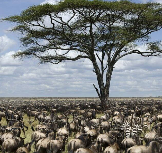 The Great Serengeti shutterstock_