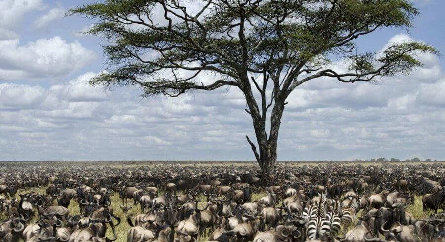 The Great Serengeti shutterstock_