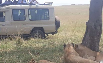 our customers enjoying game drive in tanzania