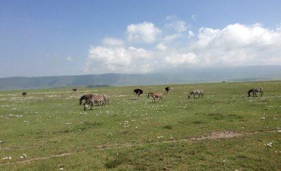 tour ngorongoro