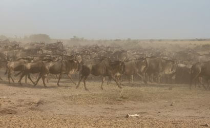 wildebeest-migration serengeti