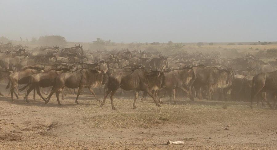 wildebeest-migration serengeti