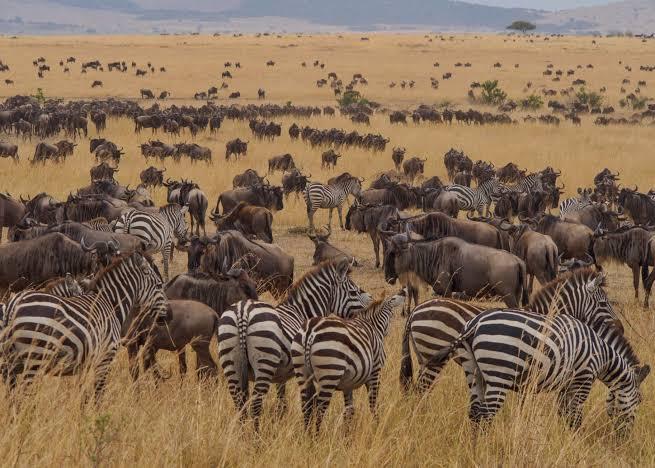 Mwanza serengeti ngorongoro