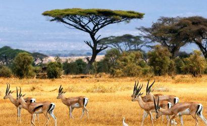 Serengeti-National