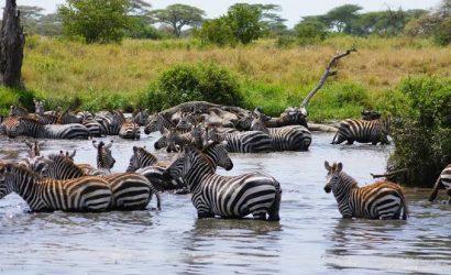 Serengeti mwanza tour