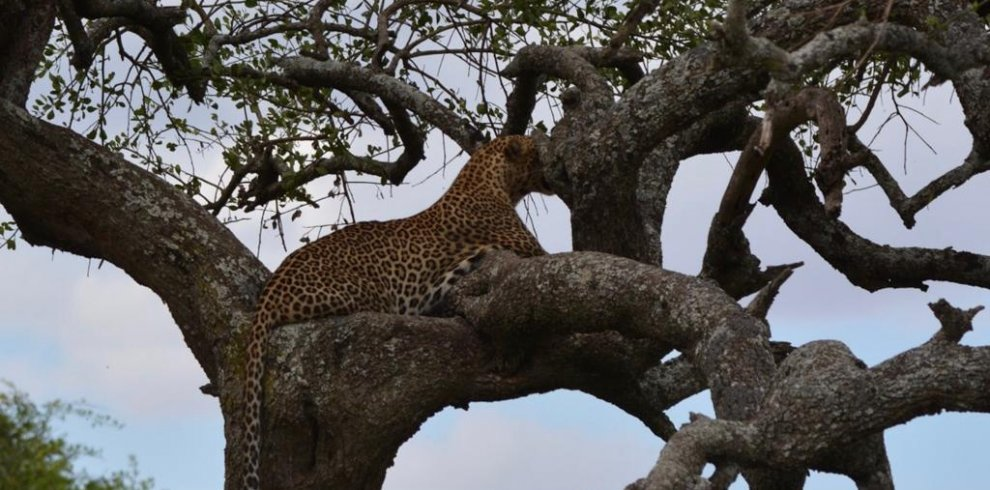 how a wonderful animal in the tree