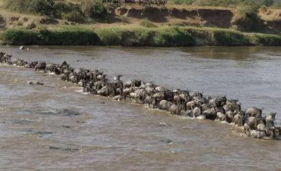 migration in serengeti tour