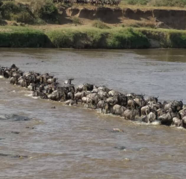migration in serengeti tour