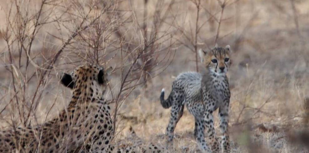 the animal in tanzania