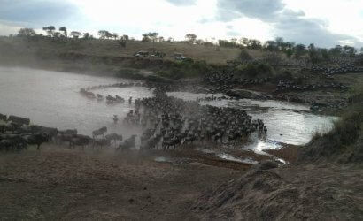 wilderbeest migration in the sere