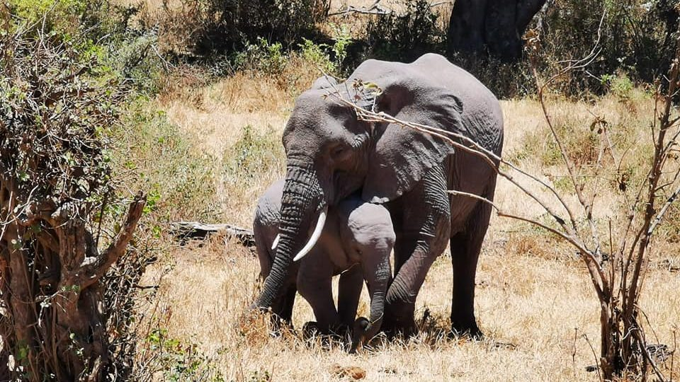 elephant and her baby elephant
