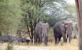 the tarangire tanzania